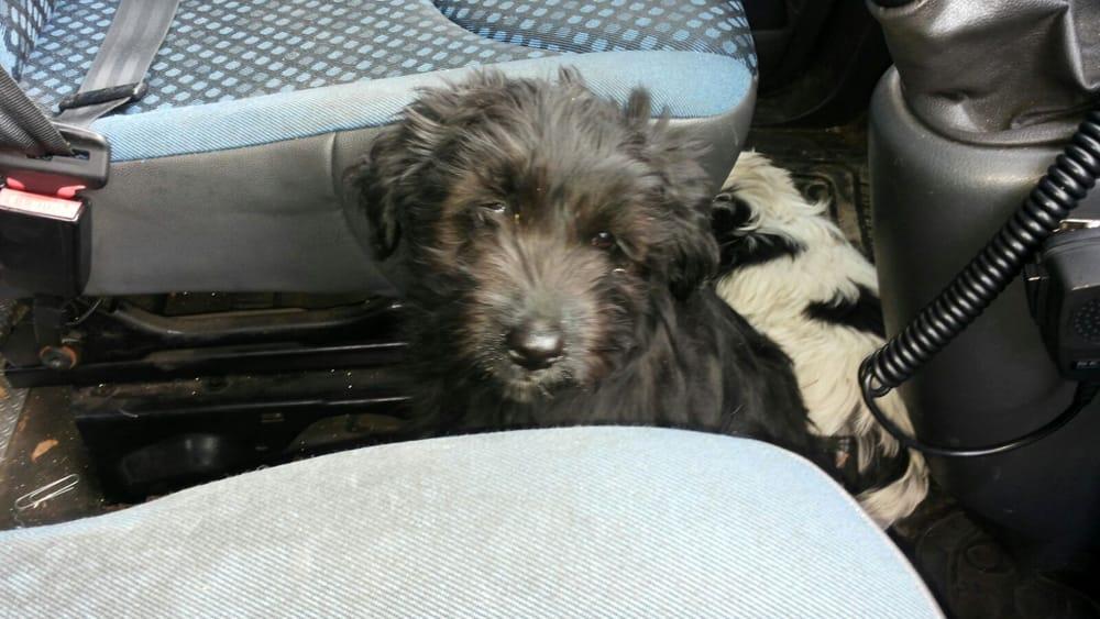 Porta portese est salvati cuccioli di cane indagini su - Porta portese offerte lavoro roma ...