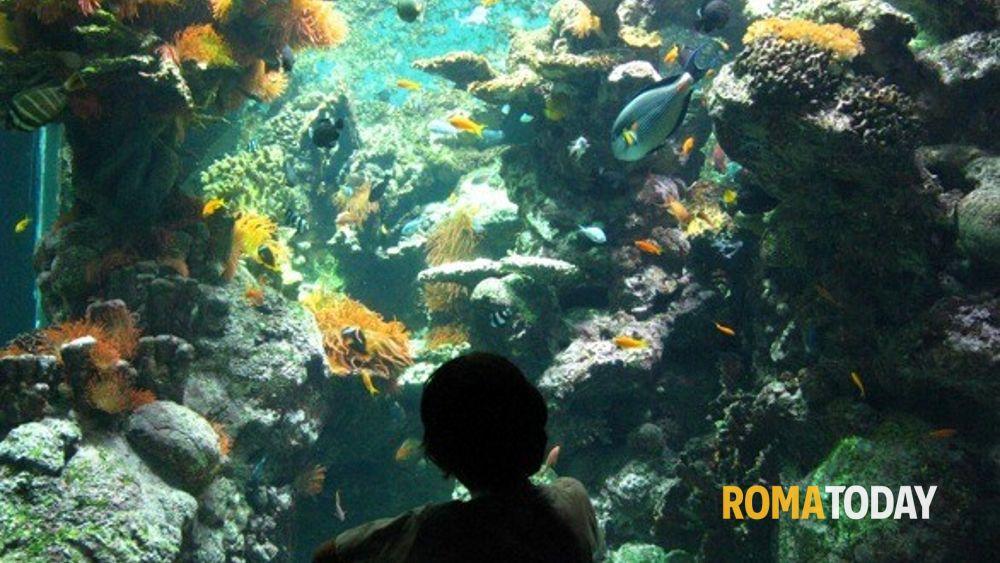 Acquario di roma rimandata l apertura eravamo in attesa for Acquario a colonna
