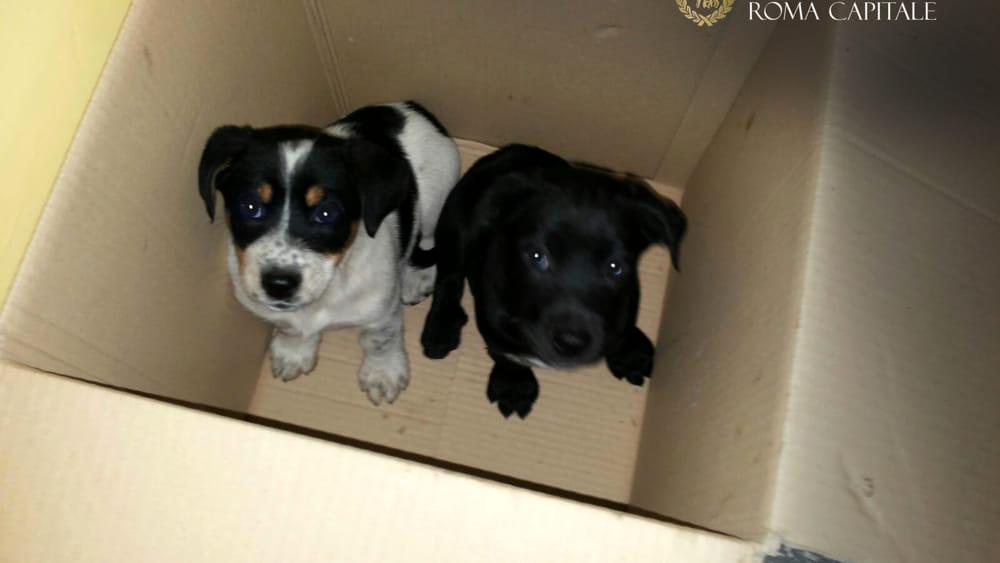 Salvano due cuccioli di cane dalla vendita illegale al - Porta portese rubriche lavoro ...