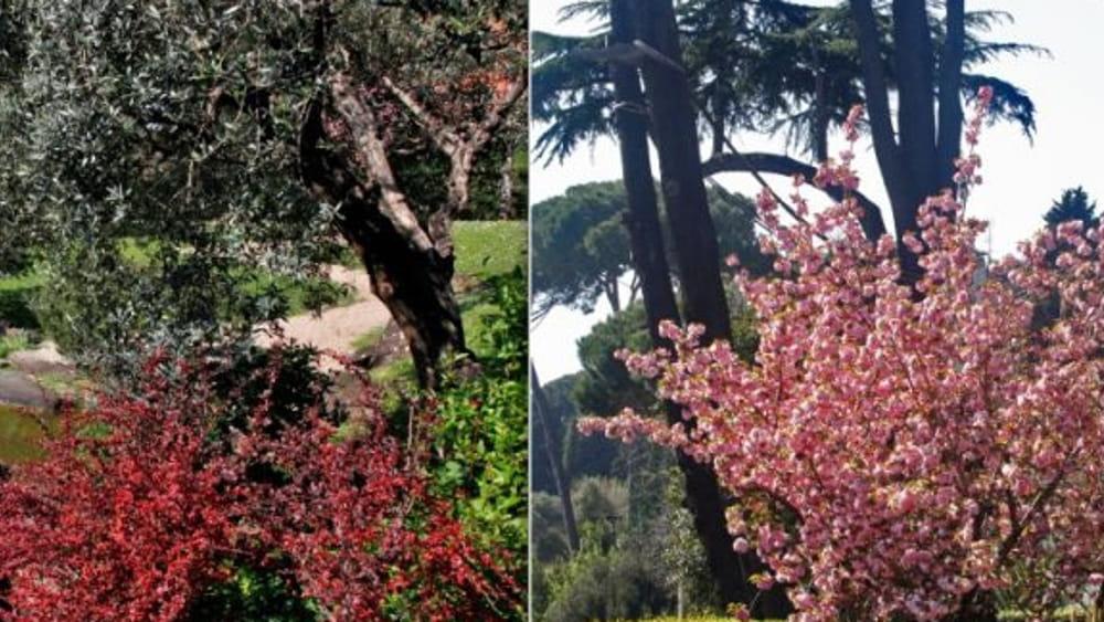 Giardino giapponese a roma le visite guidate date e info per le