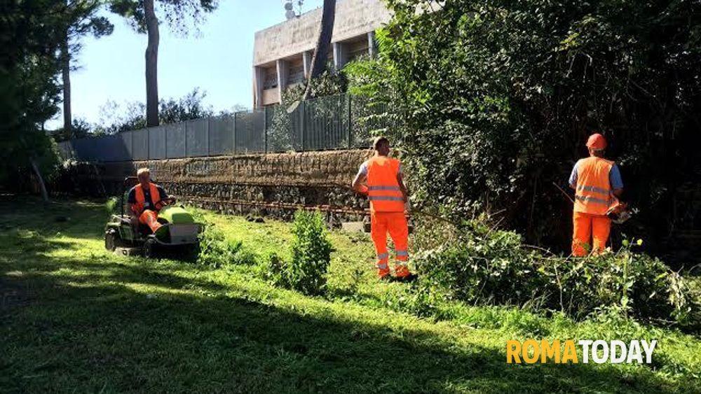 Ufficio Verde Pubblico Brescia : Fiumicino verde pubblico iniziati lavori di manutenzione a isola